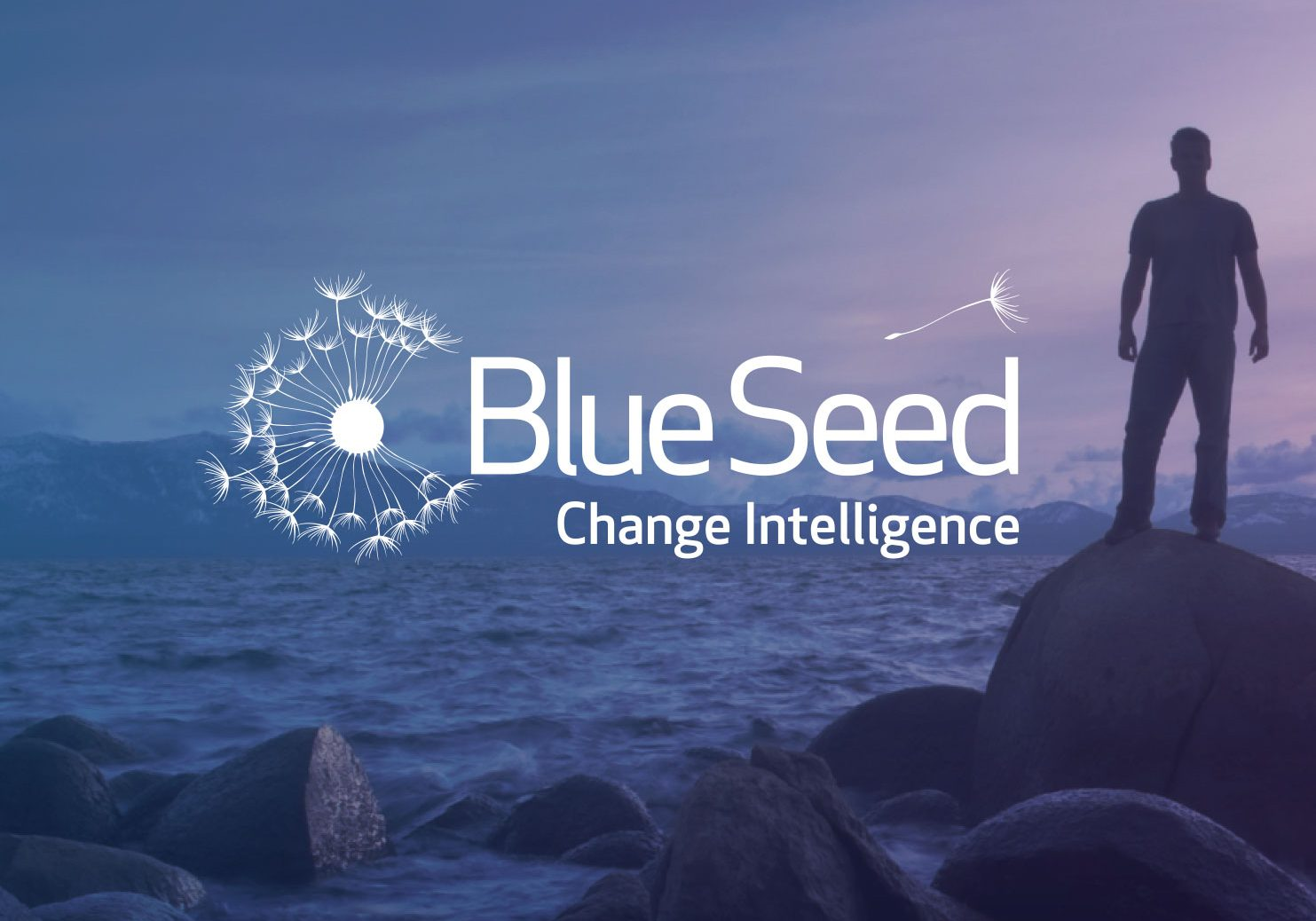 Blue Seed Consulting <br> Brand / Web / Strategy